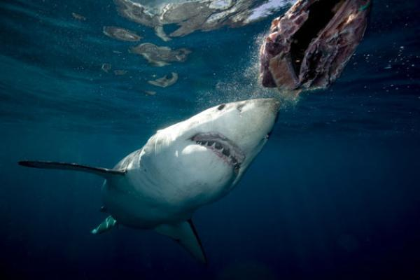 Haiangriffe ägypten