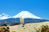 Der Lauca-Nationalpark :  - Chile